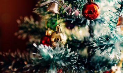 Cât costă bradul de Crăciun în 2020, reduceri până pe 6 decembrie