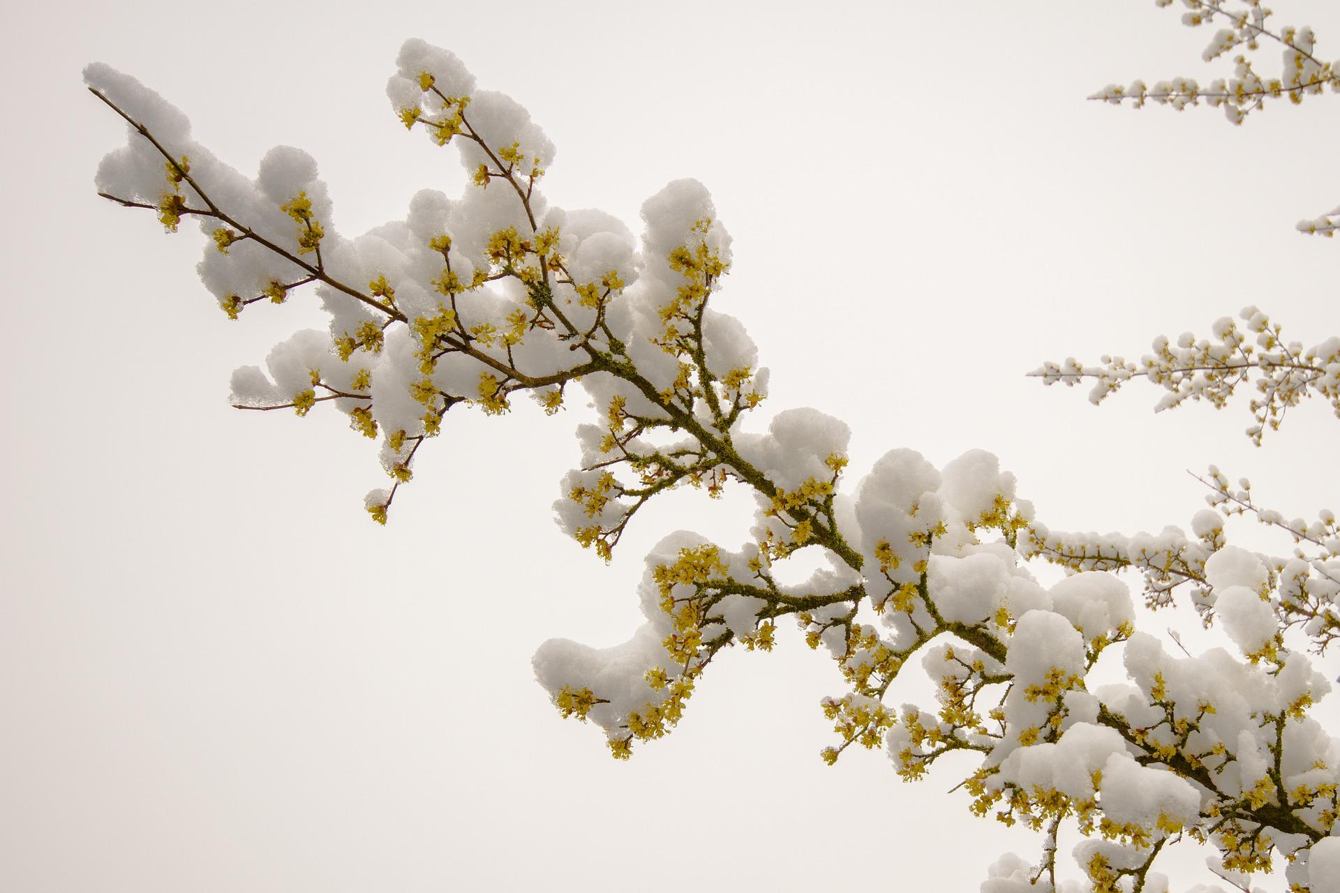 Calendar Ortodox martie 2021: Sărbători și zile în care nu se spală. Postul Paștelui
